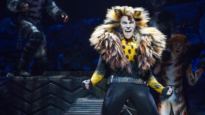 Cats at Des Monies Civic Center